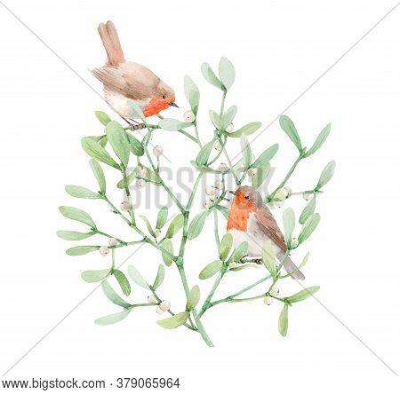 Beautiful Image With Watercolor Mistletoe Plant And Robin Bird. Stock Illustraqtion.