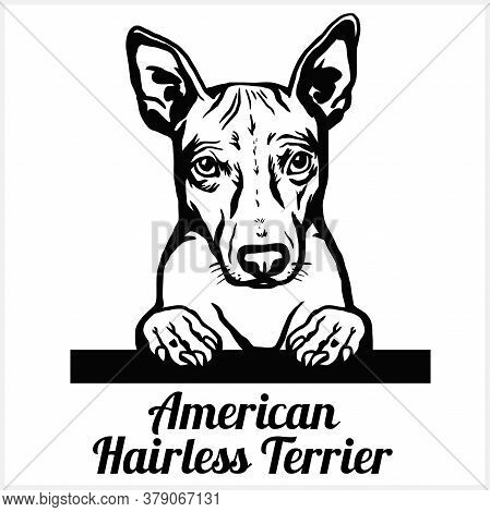 American Hairless Terrier - Peeking Dogs - Breed Face Head Isolated On White