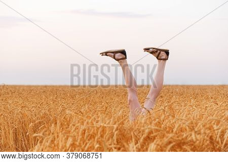 Women Legs Sticking Out Of Wheat Field In Sunny Day. Concept Of Leisure Happiness.