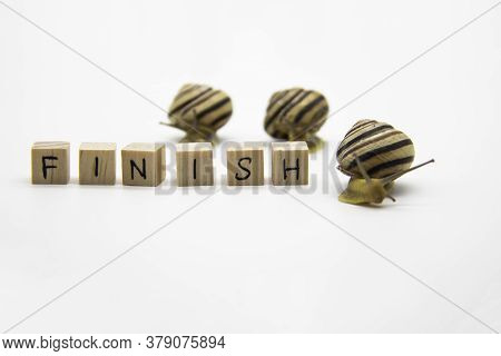 Striped Land Snails With Small Wooden Cubes With Letters Isolated On The White Background. A Word Fi