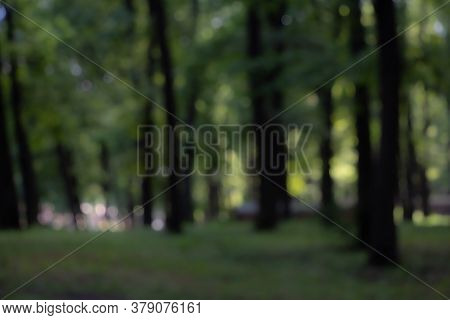 Blurry Nature Wallpaper. Forest Bokeh Background. Green Defocused Backdrop For Your Design.