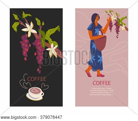 Set Cards For Coffeeshop Or Coffee Package Template Woman And Coffee Bush.