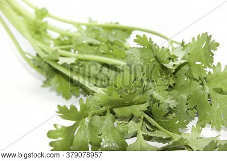 Green Coriander For Garnishing Food On A White Background