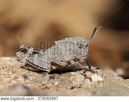 small grasshopper in natural habitat in summer
