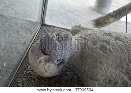 Victim of Vesuvius eruption