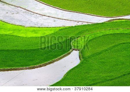 Terraced Rice Fields in Mu Cang Chai
