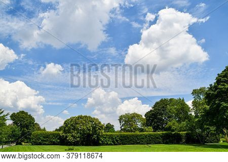Landscape Of Grass, Trees And Beautiful White Puffy Clouds