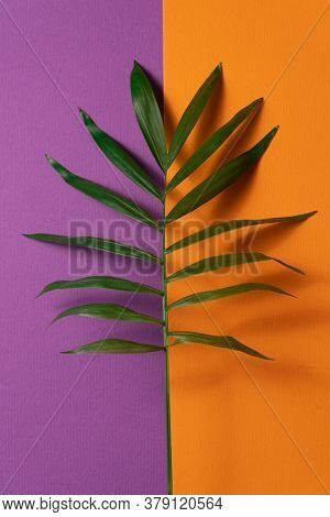 Tropical plant leaf on orange and violet paper background. Flat lay, top view, minimal design template with copyspace.