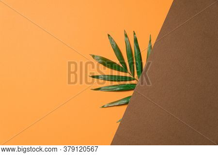 Tropical plant leaf on brown and orange paper background. Flat lay, top view, minimal design template with copyspace.