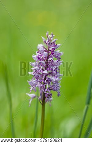 A Closeup Shot Of A Beautiful Southern Marsh-orchid Under The Sunlight