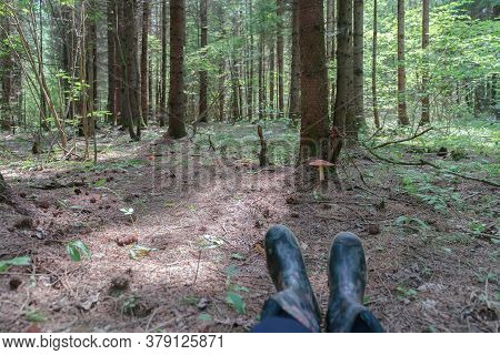 Walk And Rest In The Forest, Picking Mushrooms, Quiet Hunting, Feet In Rubber Boots Against The Back