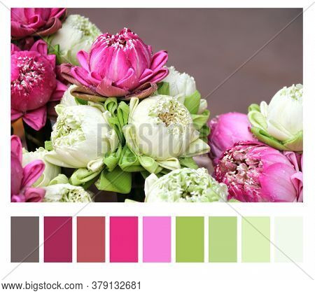 Color matching palette with complimentary colour swatches. Traditional flowers offering for donation a the Buddha. Bouquet of lotus flower offerings of white and purple colors