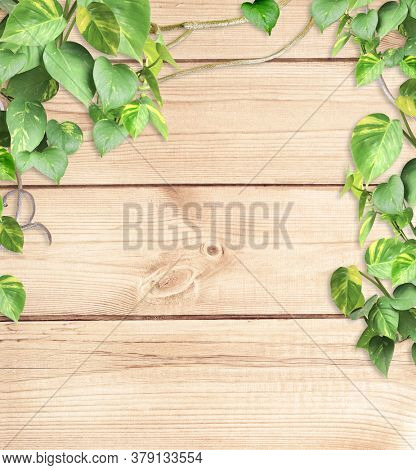 Vintage wooden board with liana branches and tropical leaves. Exotical background with wood plank, plants of jungle and copy space for text. Mock up template