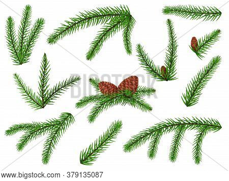 Fir Branch. Christmas Tree, Pine Sprig, Conifer With Cone. Lush Fir Branch Holiday Green Decoration