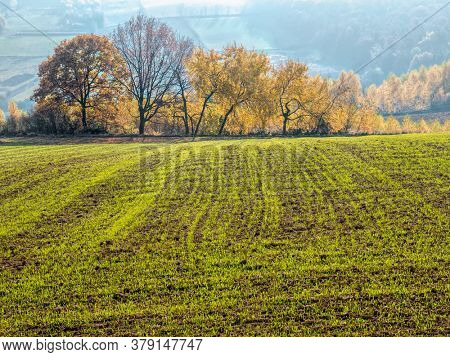 Arable field with raw of trees in the fall calors in the background