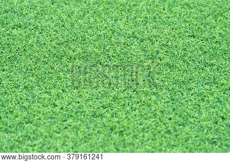 Green Grass Background. Green Grass Texture For Background. Green Lawn Pattern And Texture Backgroun