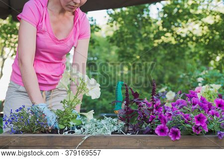 Young Caucasian Woman Gardener Replanting Flowers Into Wooden Container Pot In Street Cafe, Outdoors