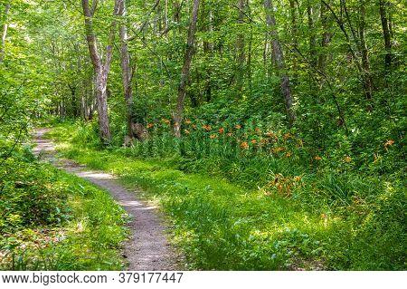 Scenic Summer Landscape In Wilbour Woods, Rhode Island
