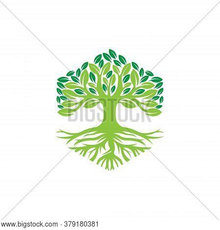 Tree. Tree Logo. Tree Logo vector. Tree icon vector. Tree icon. Tree Logo Vector. Decorative Tree Logo. Tree Logo design. Tree Logo vector. Tree Logo icon vector. Tree Sign. Tree Symbol. Abstract Tree logo vector design template illustration.