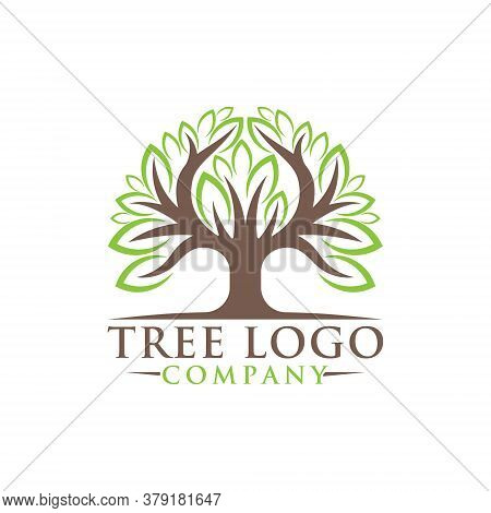 Tree. Tree Logo. Tree Logo vector. Tree icon vector. Tree icon. Tree Logo Vector. Decorative Tree Logo. Tree Logo design. Tree Logo vector. Tree Logo icon vector. Tree Sign. Tree Symbol. Abstract Tree logo vector design template illustration.