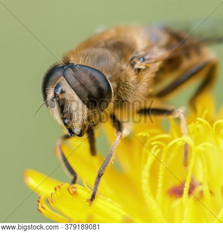Portrait Of A Buzzing Fly On A Yellow Flower Close Up