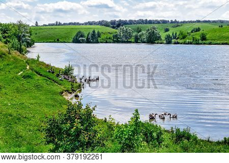 Rural Lake With Flocks Of Domestic Geese In The Water And On The Shore Against The Background Of Hil