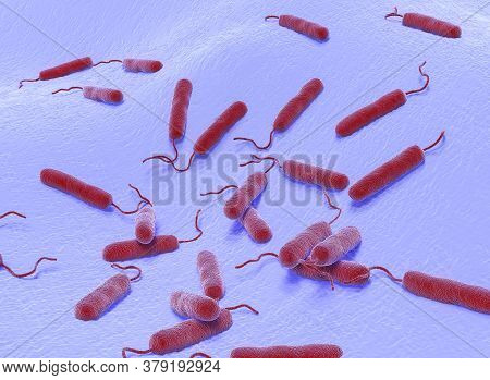 3d Illustration Of  E Coli Bacteria. This Is Shape Of Bacteria. It Is Vibrios Type Category. E Coli