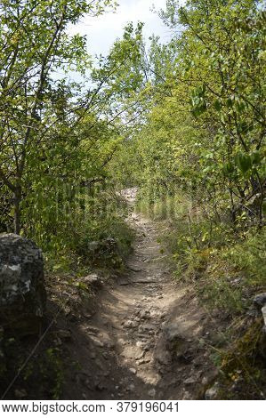 Narrow Path In The Mountains. Impassable Thickets Of Forest On The Sides Of The Trail