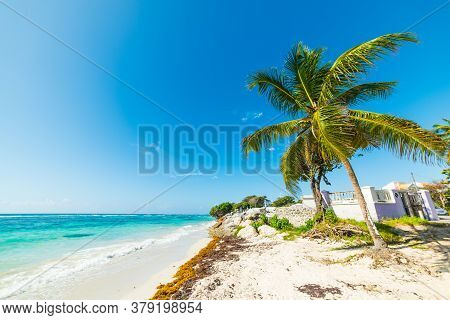 Palm Tree And White Sand In Raisins Clairs Beach In Guadeloupe, French West Indies. Lesser Antilles,