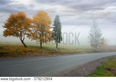 Trees In The Fog On The Road Side. Misty Autumnal Weather. Overcast Sky. Fall Season