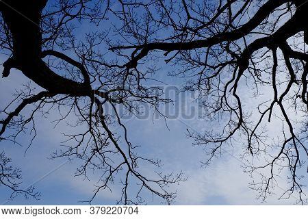 Leafless Tree Branches Against The Blue Sky.
