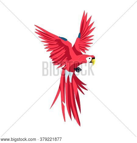 Macaw Exotic Tropical Bird. Beautiful Parrot With Bright Red Colorful Plumage. Tropical Nature Wildl
