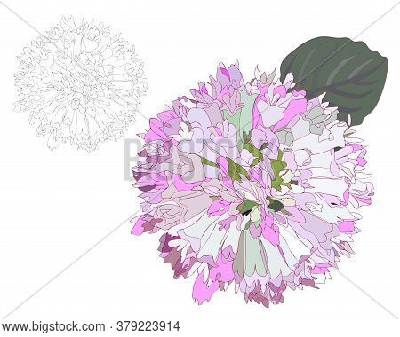 Black Line Flower Isolated On The White Background. Fancy Flower Coloring Page Or Book.