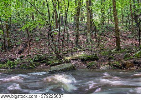 Roaring Rock Stream Passes By A Summer Forest In Warren County New Jersey.