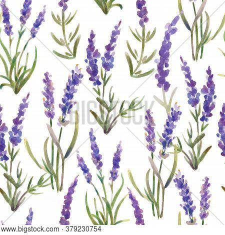 Vector Illustration. Seamless Pattern Of Lavender Flowers. Watercolor Painting