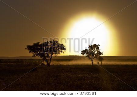 African Sunrize