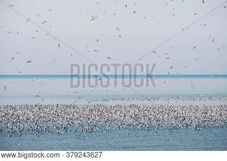 Flock Of Flying Seagulls In The Sky Over The Blue Sea With Floating Seagulls