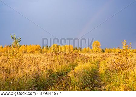 Prairie Landscape With Grasses, Meadows, Trees And A Bright Blue Sky With White Clouds. Wild Field O