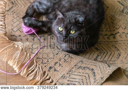 Kitten Playing With Ball Of Yarn. Gray Cat Keeping Knitting Ball And Looking Straight At Kamera. Kit