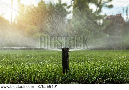 Gardening And Landscaping Industry. Automatic Backyard Garden Lawn Water Sprinkler In Action. In Gro
