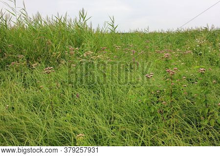 Summer Landscape In Cloudy Weather With Marsh Grasses And Wild Flowers