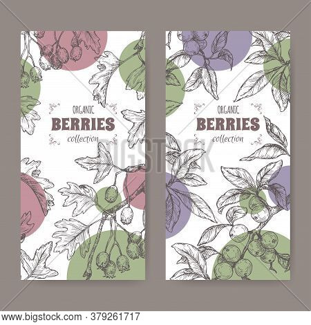 Two Labels With Hawthorn Aka Crataegus And Blackthorn Aka Prunus Spinosa Branch Sketch. Berry Fruits