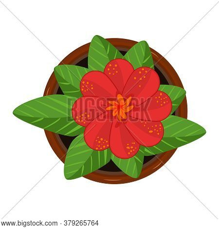 Flower In Pot Isolated On White Background. Fresh Red Bloom Flower With Green Leaves In Ceramic Flow