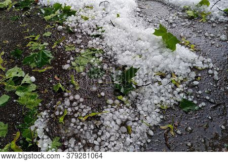 Large Chunks Of Hail On Dark Asphalt And Downed Green Maple Leaves, A Weather Anomaly On A Hot Summe