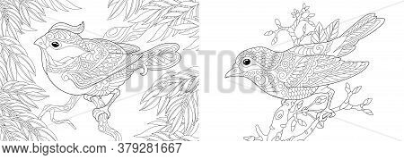 Coloring Pages. Decorative Birds In The Garden. Line Art Design For Adult Colouring Book With Doodle