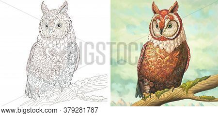 Adult Coloring Page. Owl Bird. Colorless And Color Sample Painted In Watercolor Imitating Style. Col