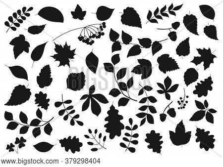 Tree Leaves And Plant Seeds Isolated Nature And Flora Silhouette Icons. Vector Forest Tree Leaf Of M