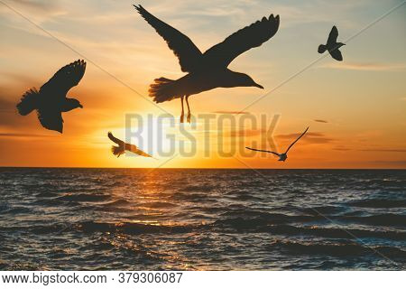 Seagulls Silhouettes Flying Over Water At Sunset