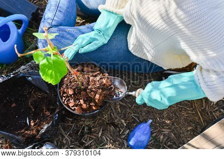 Woman Uses A Trowel To Put Bark On A Potted Plant While Surrounded By A Spray Bottle, A Bag Of Soil