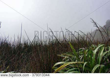 Wetland Vegetation Form Low Perspective Under Hazy Grey Winter Sky With Dense Growth Or Reeds And Gr